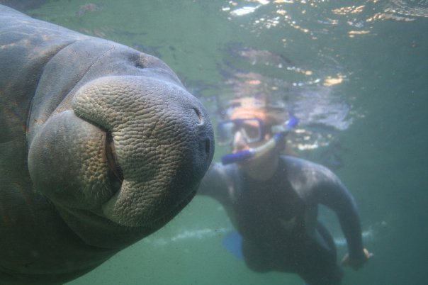 best place to swim with manatees in Florida