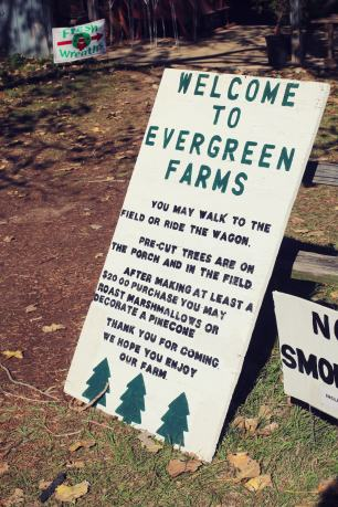 2018 Evergreen Tree Farm (1)