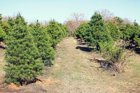 2018 Evergreen Tree Farm (11)