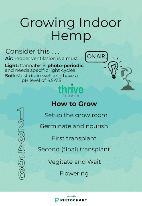 differences between hemp and marijuana