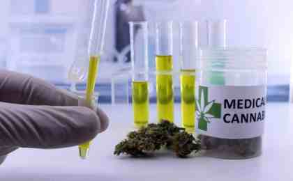 Rosin Extraction Yield Calculator and Considerations for Growers