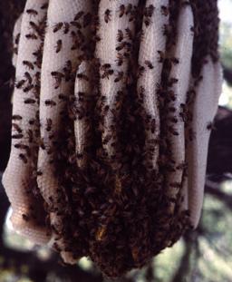 honey bee combs