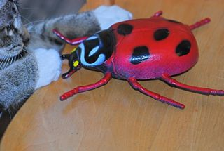 cat eating beetle