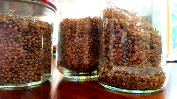 13-20161208-my-coriander-seeds