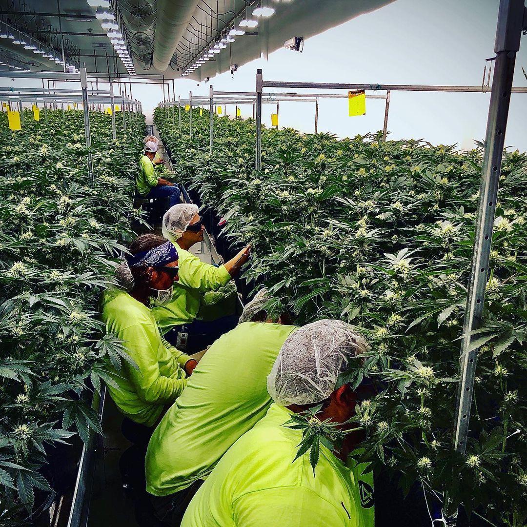 carroll-county-cannabis-company