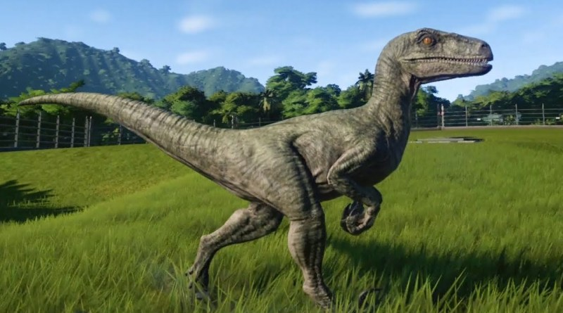 How Tall is A Velociraptor