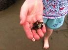 un-like hermit crabs,