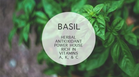BASIL: Herbal antioxidant power house rich in vitamins a, k, and c