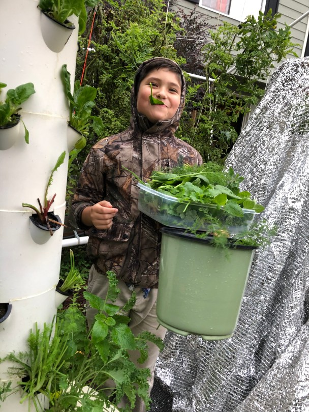 8 year old boy eating greens off a Tower Garden