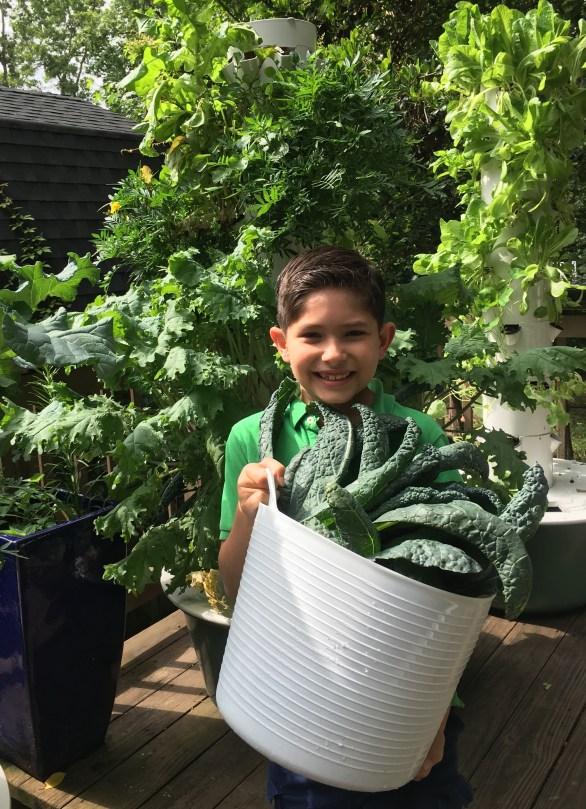 Little boy helping to harvest kale from hydroponic Tower Garden