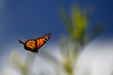 butterfly-in-flight-plant-a