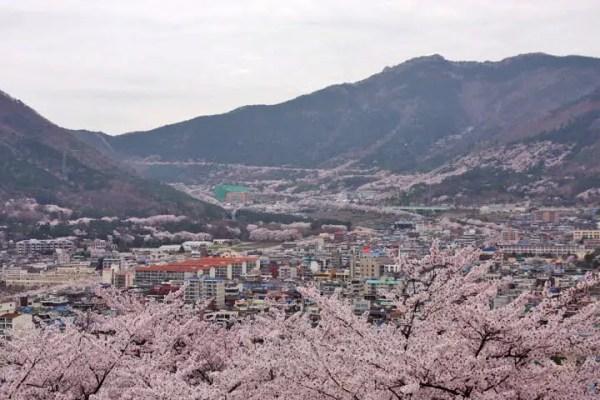 Town of Jinhae, cherry blossoms jinhae