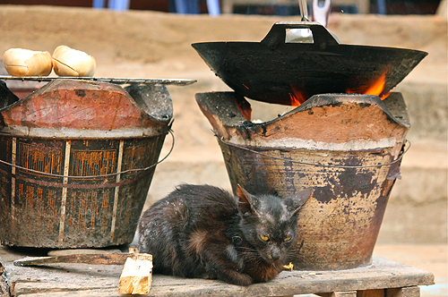 lao cat by fire