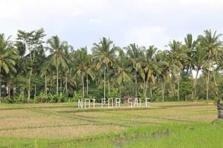 bali sightseeing, bali countryside,