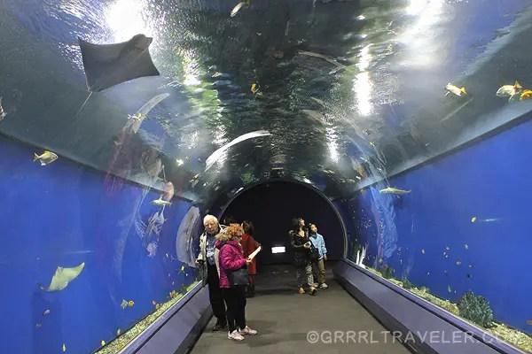osaka aquarium japan