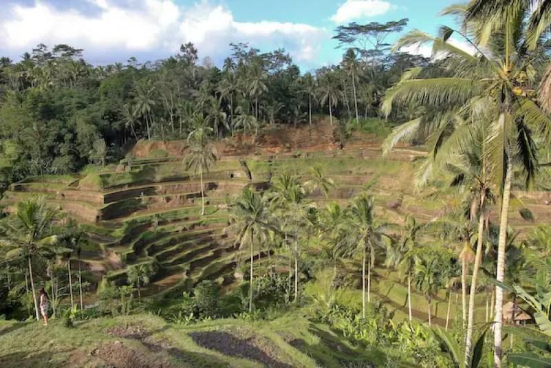 ubud Rice terraces of Tegallalang village