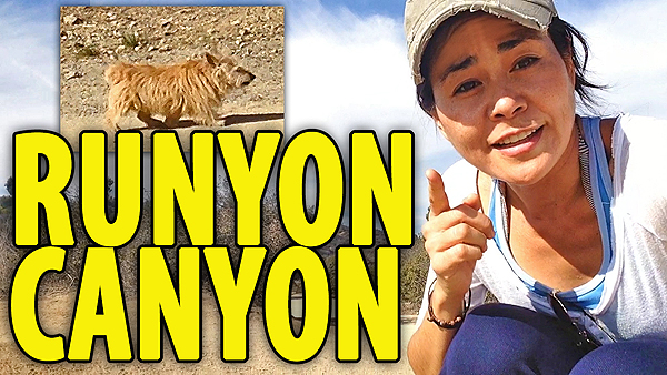 Runyon canyon hike, best hikes la, best hikes los angeles,