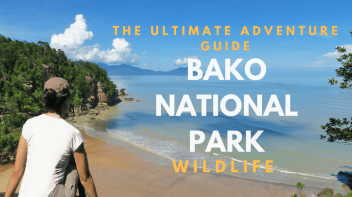 Bako National Park wildlife adventure, guide to bako national park