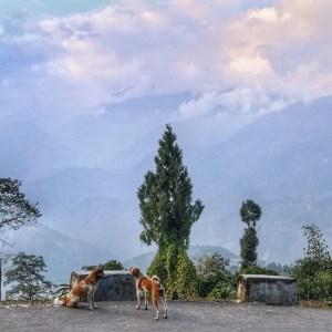 Pelling sikkim, sikkim india