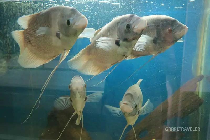 kuching aquarium, best thing to do in kuching, kuching travel guide, kuching sarawak
