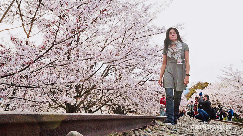 Sakura at Keage Incline, best cherry blossom spots of kyoto osaka nara, kansai travel guide, philosophers walk