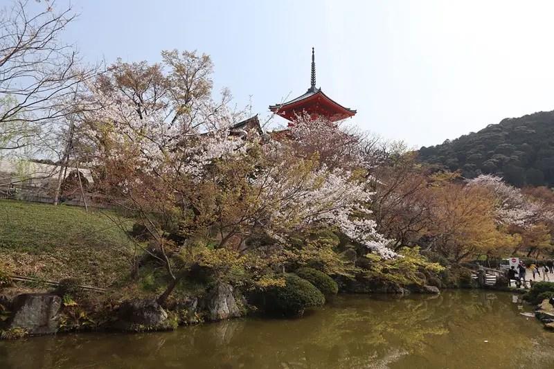 kiyomizu dera temple, best sakura spots in kyoto