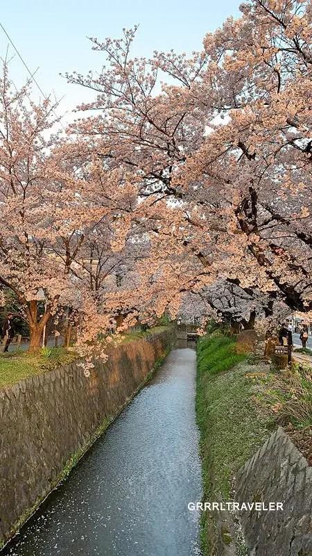 best cherry blossom spots of kyoto osaka nara, kansai travel guide, philosophers walk