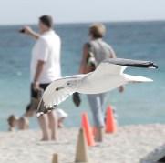 seagulls_14