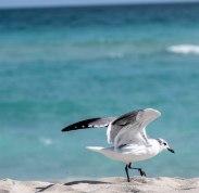 seagulls_9