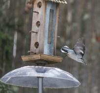 birds2_24