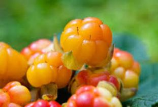 Cloudberries: a Scandinavian treasure