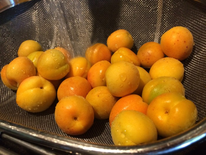 Rinsing the apricots