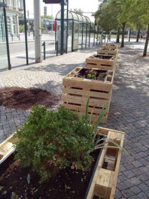 Bild: Frank Schröter; Stadt der Zukunft - Stadtbegrünung am Friedrich-Wilhelm-Platz in Braunschweig