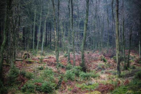 Bruchwald im Naturschutzgebiet Braucke im Wehetal
