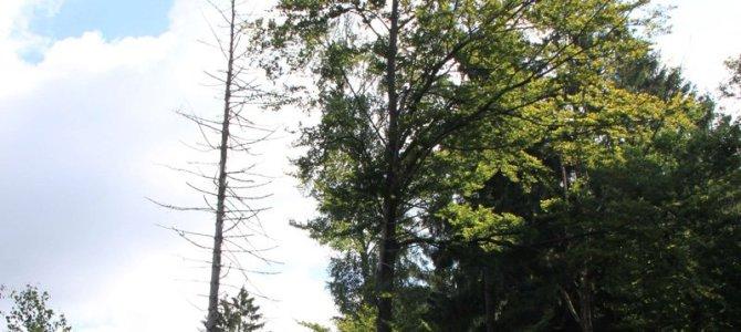 Waldzustandsbericht 2016