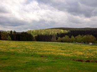Frühlingsgrün im Oberbergischen © 2017 Foto: Michael Wette