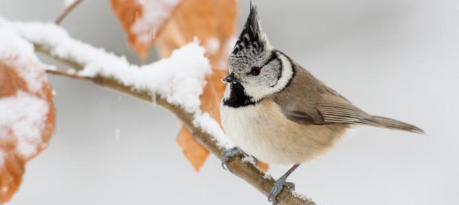 Ist unsere Vogelwelt in Gefahr?