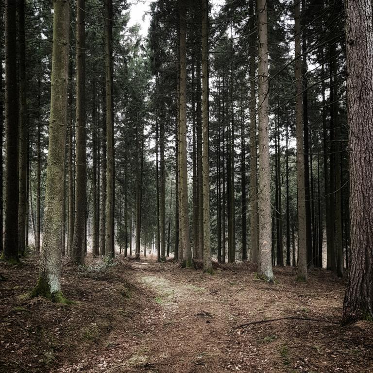 Wald in Meinerzhagen © 2019 Foto: Stefanie Schildchen