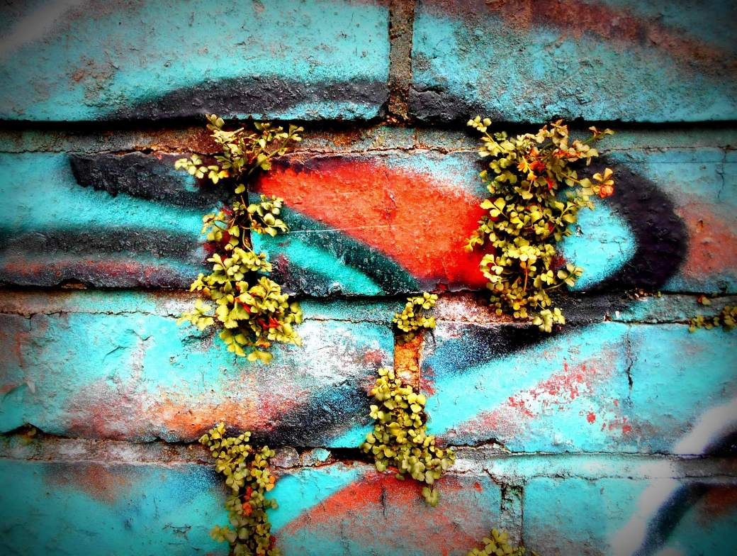 Mauergrün