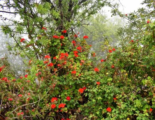 Blütenmeer rot - Kopie