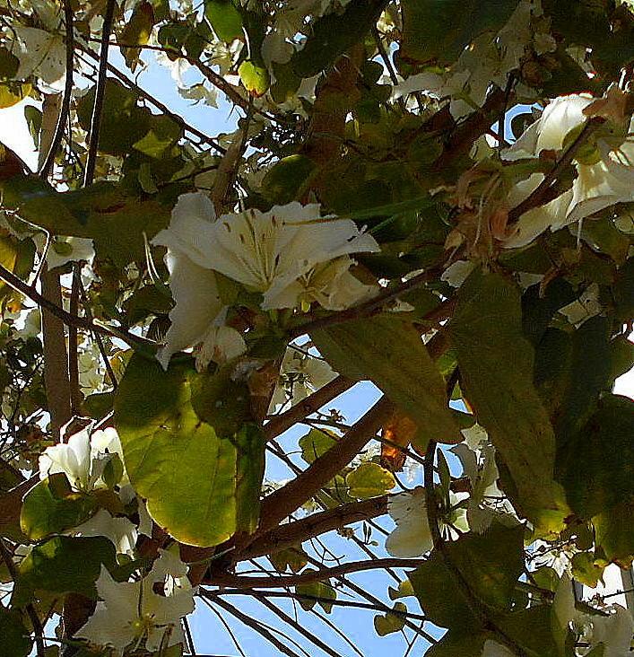 Blütenrausch weiss - Kopie