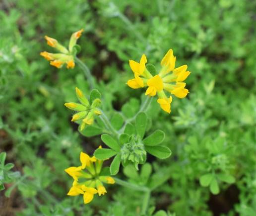 Gelber Blütentraum - Kopie