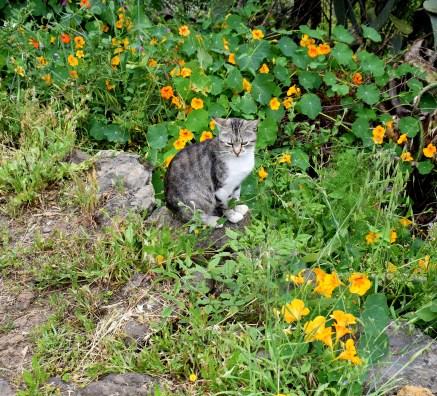 Katzenleben auf La Palma