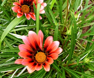 rote Blüten
