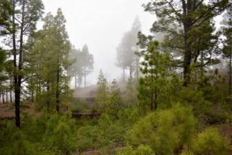 Wald im Nebel