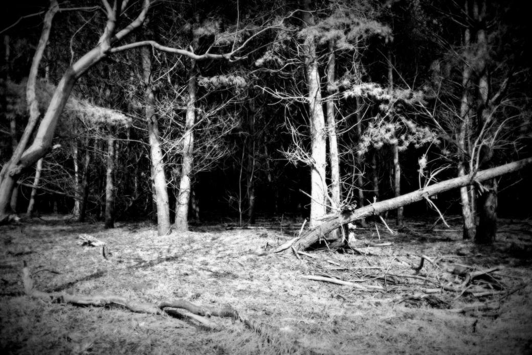 Der Wald ruft