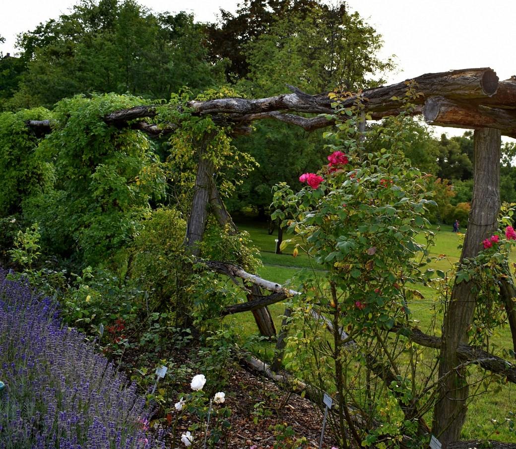 Rosen botanischer Garten