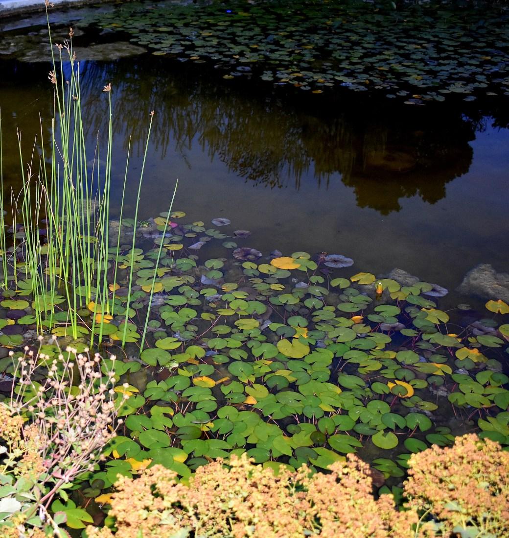 Teich im botanischen Garten