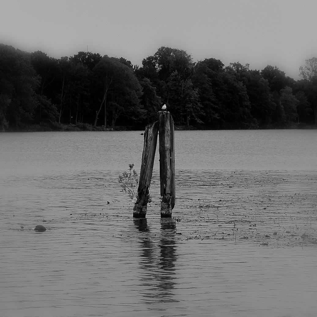 Ausguck im Wasser sw