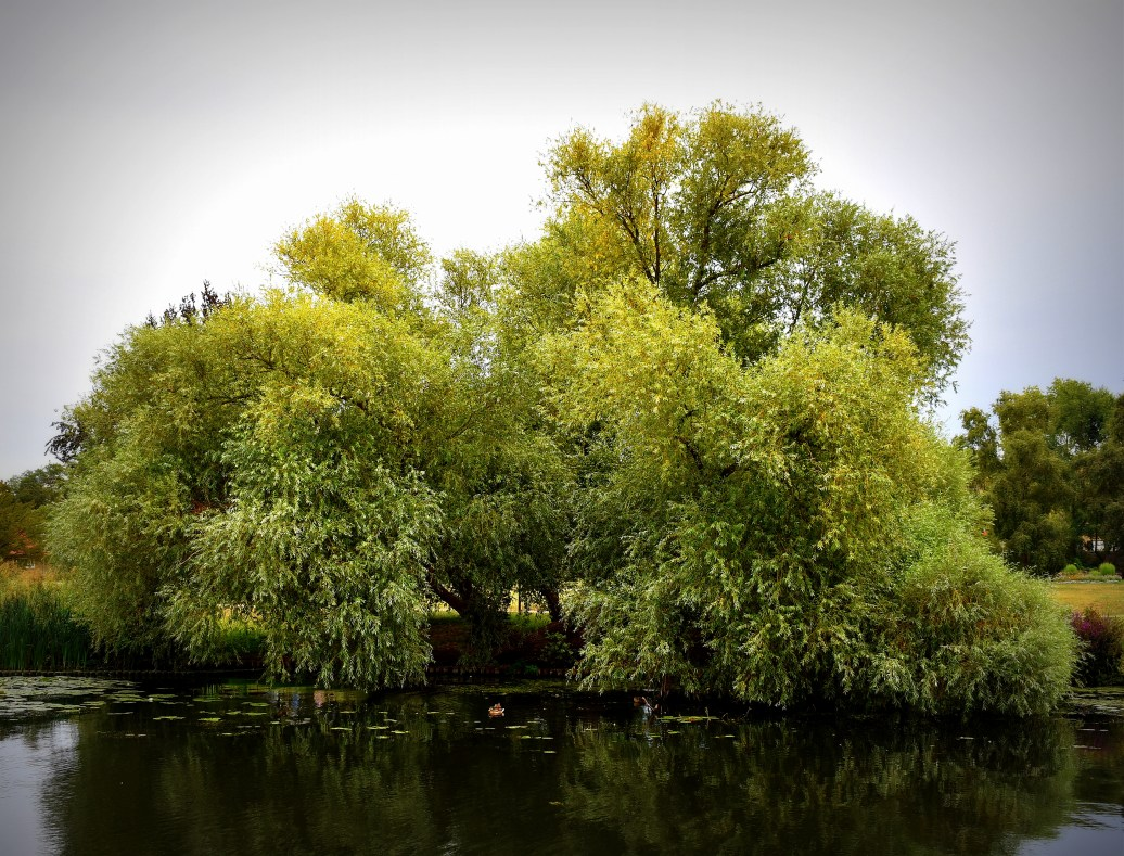 Baum am Ufer